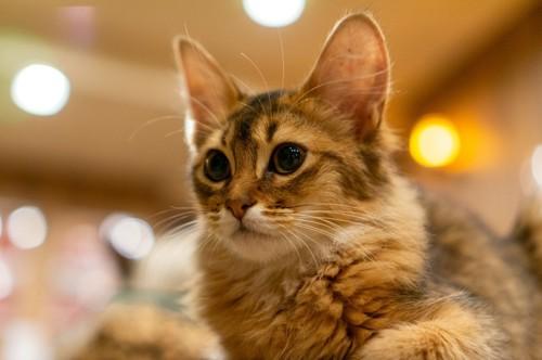 一点を凝視する猫