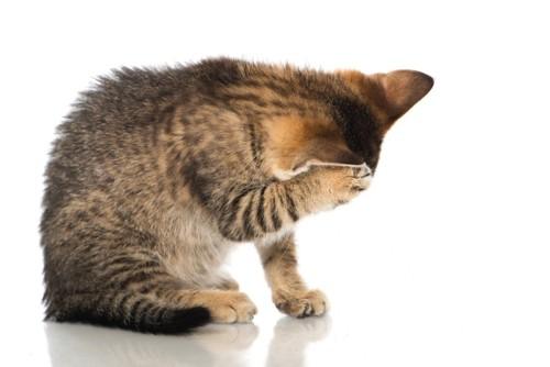 前足で頭を毛づくろいする猫