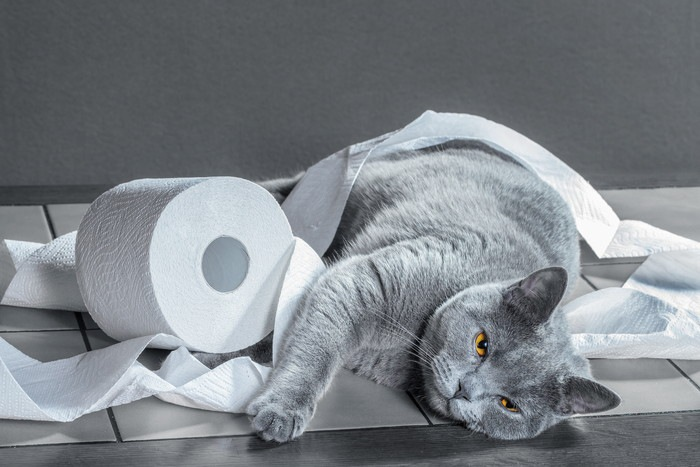 トイレットペーパーにくるまっている猫