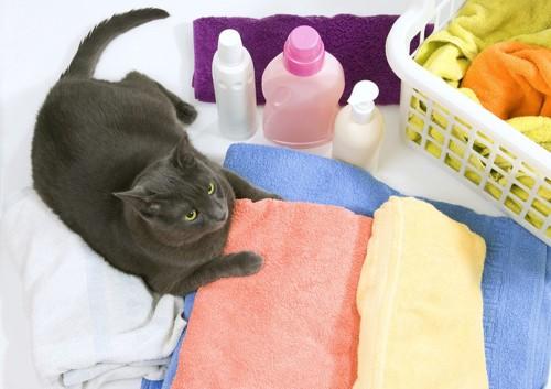 猫とタオルと洗剤のボトル