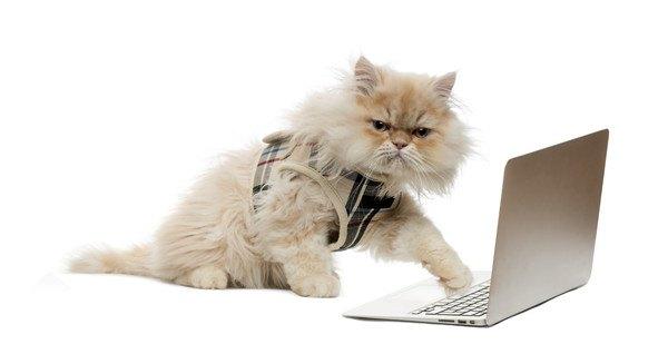 パソコンを操る猫