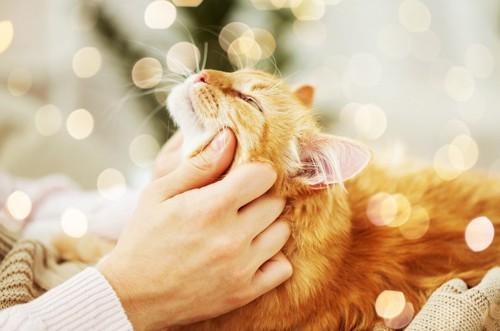 猫の頬をなでる手