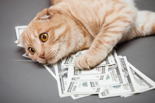 お金の上に転がる猫