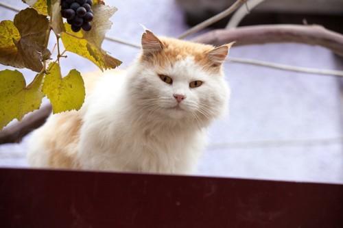 人懐こそうな猫