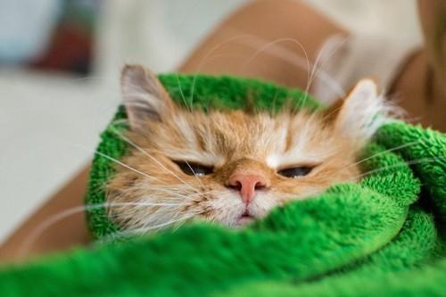 緑色のタオルに包まれた猫
