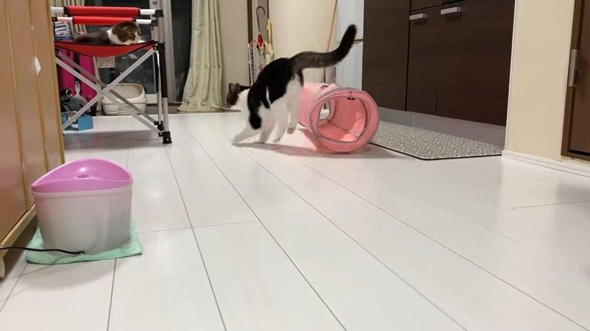 跳ねる猫の後ろ姿