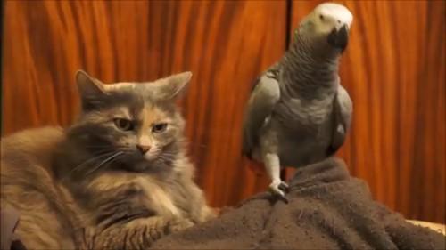 並ぶオウムと猫