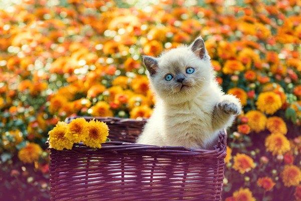 オレンジの花と子猫