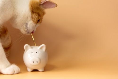 コインをくわえて貯金箱に入れようとする猫