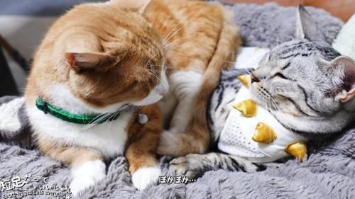 向き合う猫