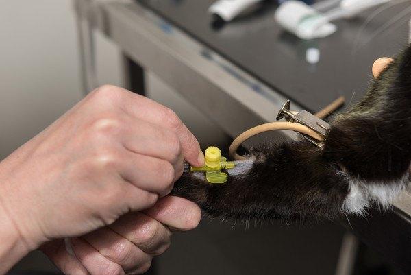 検査を受ける猫