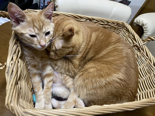カゴの中の猫たち