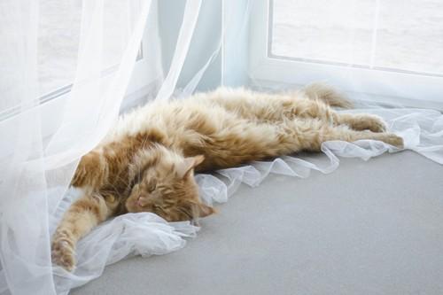 カーテンの上に乗る猫
