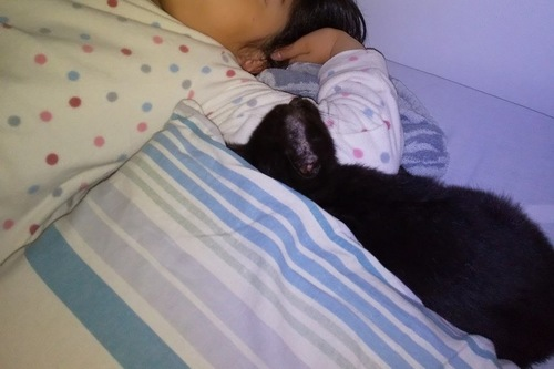 添い寝する黒猫と女児)