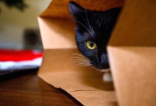 紙袋から顔を半分のぞかせる猫