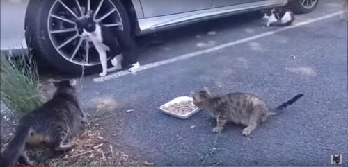 母猫の猫パンチ
