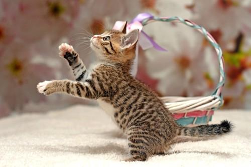 無邪気に遊ぶ子猫