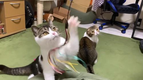 おもちゃで遊ぶ猫と振り向く猫