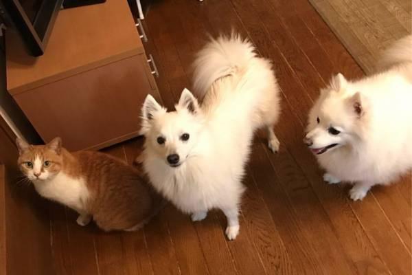 自宅の犬と猫