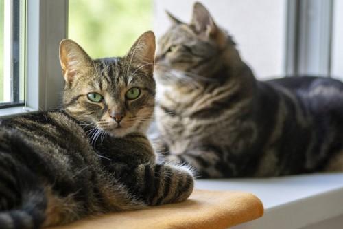 窓辺でくつろぐ猫たち