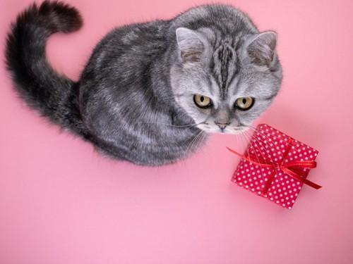 赤いプレゼントボックスと猫