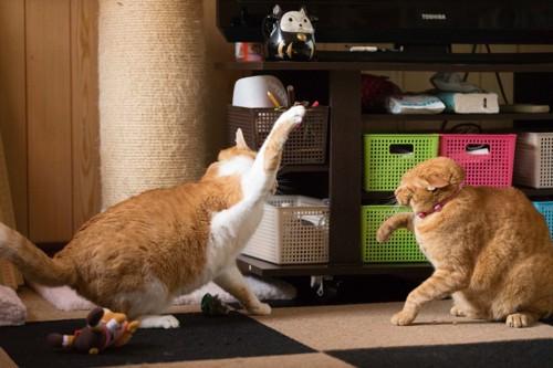 猫パンチを繰り出す猫