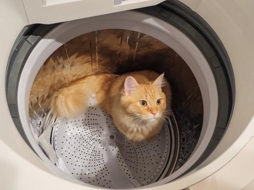 洗濯機に入る茶とら猫