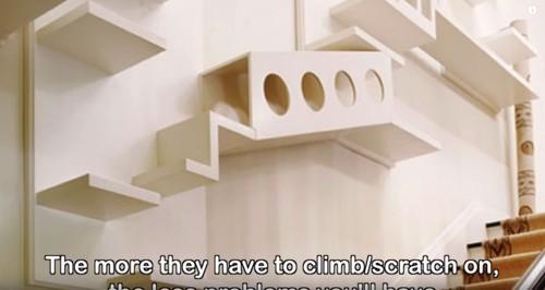 壁に猫用の棚