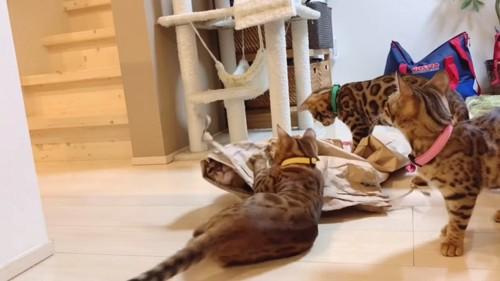 子猫と米袋から出てくる猫