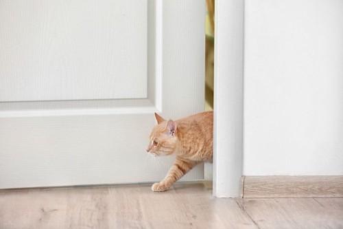 ドアの隙間から出入りする猫