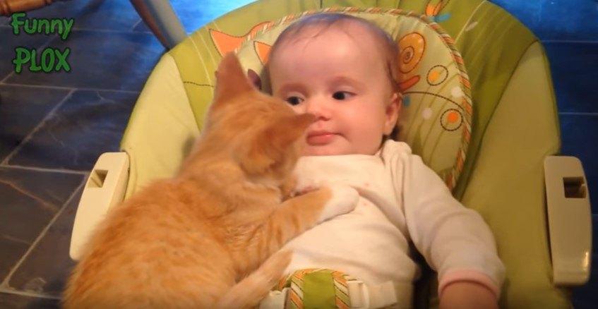 トラ猫と乳児