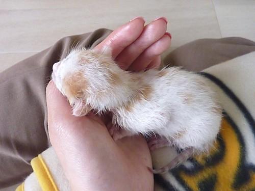 ネズミサイズの仔猫