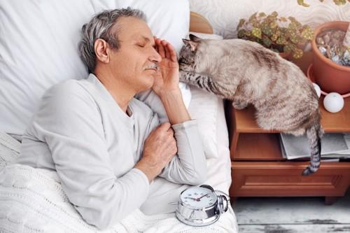 眠るシニアと猫