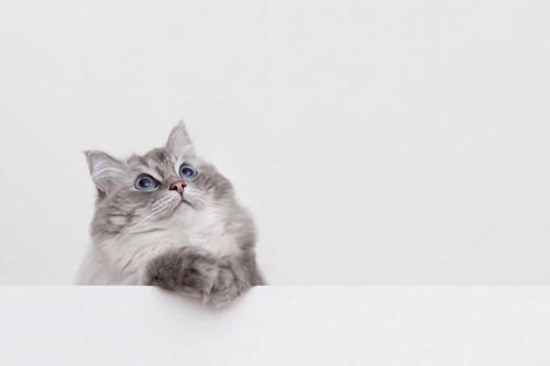 手をかけて上を見ている猫