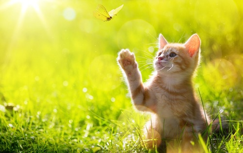 自然の中で蝶を追う子猫
