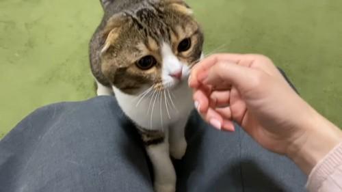 人の手に顔を近づける猫