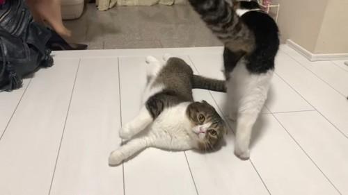 寝転がる猫と隣に立つ猫