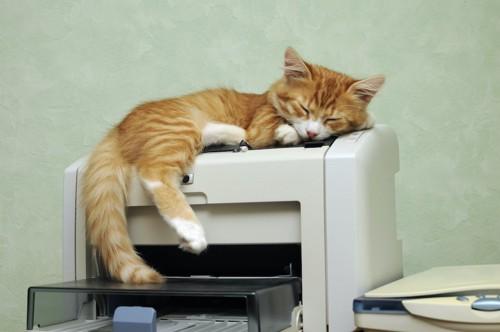 プリンターの上で寝る猫