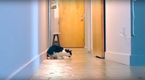 悲しそうにしている猫
