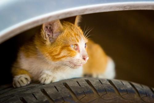 タイヤに隠れる猫