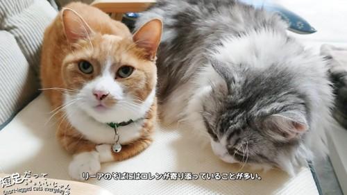 顔をあげる猫と寝る猫