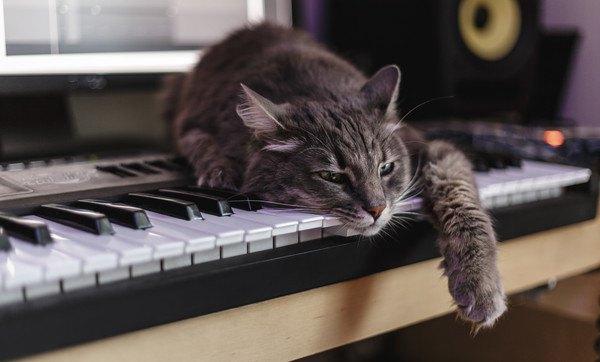 ピアノに寝そべる猫
