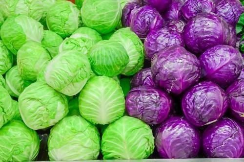 緑と紫のキャベツ