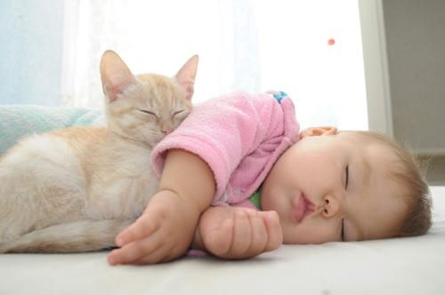 赤ちゃんと寝る子猫
