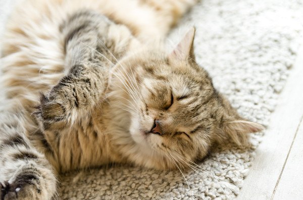 眼を細くして寝転がる猫