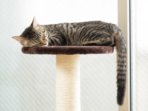 キャットタワーで昼寝する猫