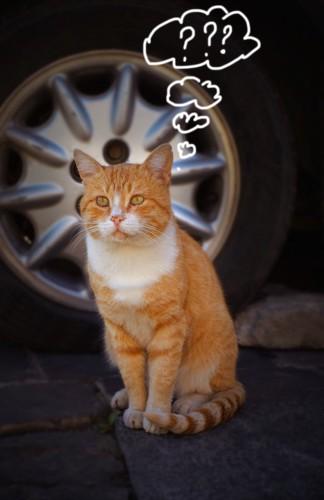 座って考え事をしている猫