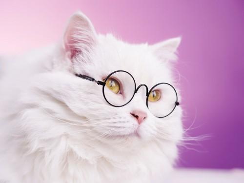 眼鏡をかけた白猫