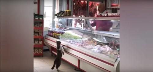 お肉の催促をする猫