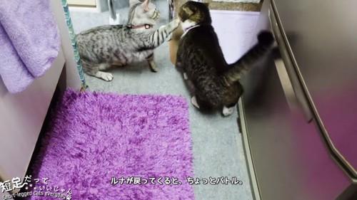 黒系の猫に前足を伸ばす子猫